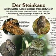 Ochsenfurt Steinkauz