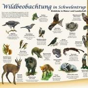 wildbeobachtung.v1