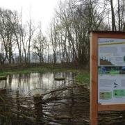 Wenningsen naturnaher Teich