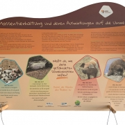 Massentierhaltung und ihre Auswirkung auf die Umwelt