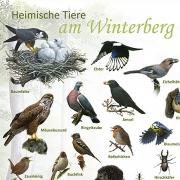 heimische tiere am winterberg 120x100.indd