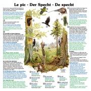 Lehrtafeln in 3 Sprachen (Französisch, Deutsch, Holländisch)