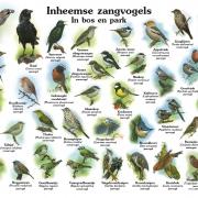 Inheemse zangvogels